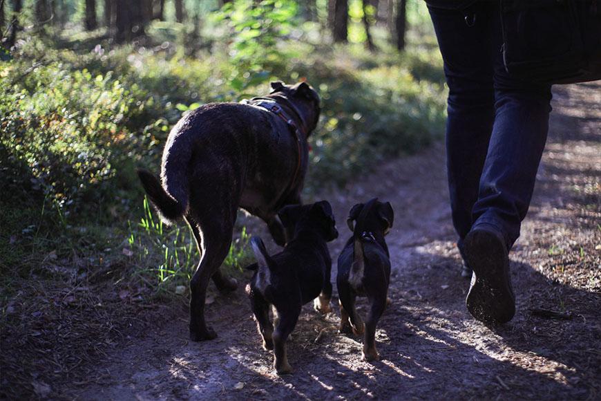 weekendowe-szkolenie-psow
